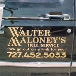 Walter Maloney Crushed Gold Lettering